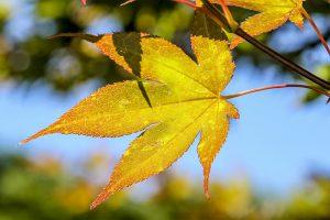 Beginner photography - Leaf