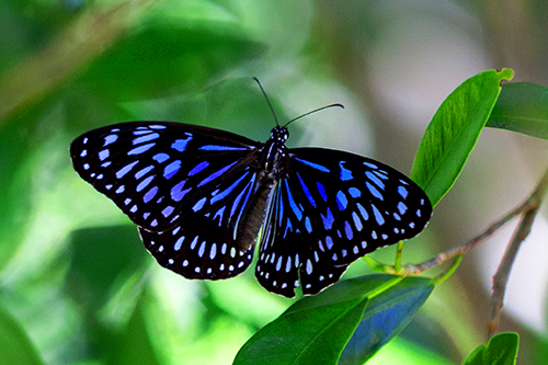 Macro Photography - Blue Butterfly