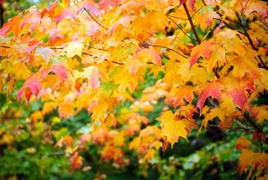Autumn in New Zealand Photography Tour