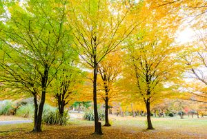 Autumn Colours Photography Tour of New Zealand