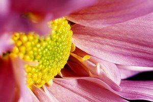 Macro Flower detail