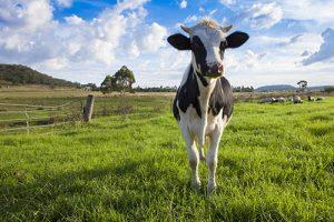 Master My Camera Cow