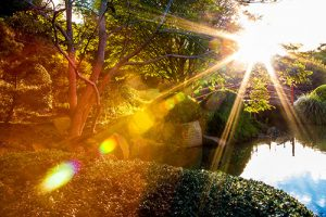 Master My Camera - Sunburst